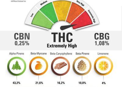auto-cinderella-jack-terpenes-and-cannabinoids-dutch-passion-cannabis-seed-company