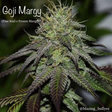 Goji Margy
