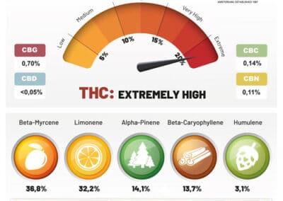 auto-Orange-Bud-terpenes-and-cannabinoids-dutch-passion-cannabis-seed-company-V2_1